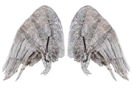 Two grunge wooden wings isolated on white background Stock fotó
