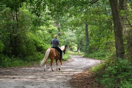 forest trail: Man Horseback Riding