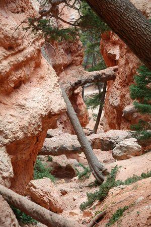 slot canyon: Bryce Canyon National Park - Utah - USA