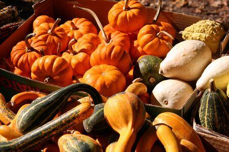 Basket of Holiday Pumpkins and Squash Фото со стока