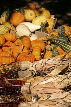 Holiday Corn and Pumpkins photo