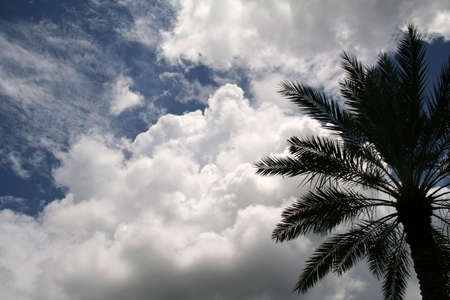 Tropical Palm Tree with Clouds in the Sky