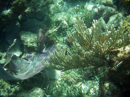 barrier: Fancy Underwater Coral in Great Barrier Reef Stock Photo