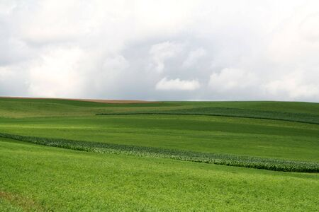 Rolling Green Hills on Lush Crop Farmland photo