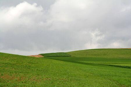 Rolling Green Hills on Lush Crop Farmland photo