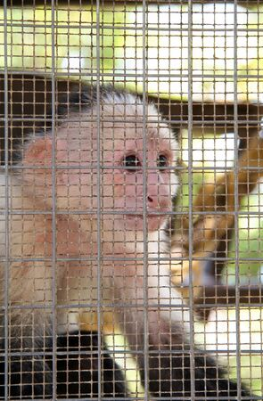 Captive Monkey in Cage Behind Metal Bars photo