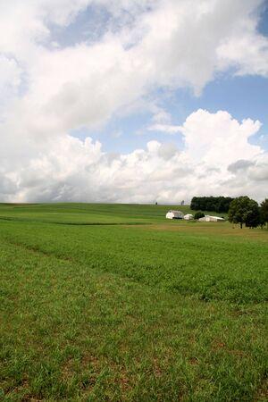 Green Field Farmland with Barn and House photo