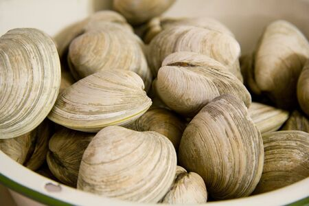 ready to eat: Steamed Clams in a Bowl Ready to Eat