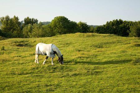 Beautiful Horse Grazing on Farmland in England photo