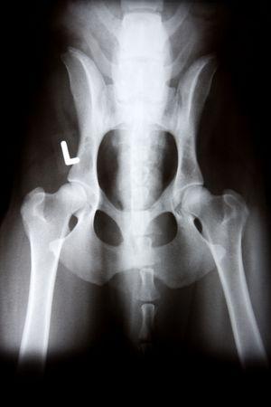 X-Ray of Animal Bones and Body