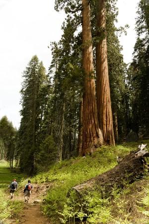 Two Men Hiking Through Sequoia National Park