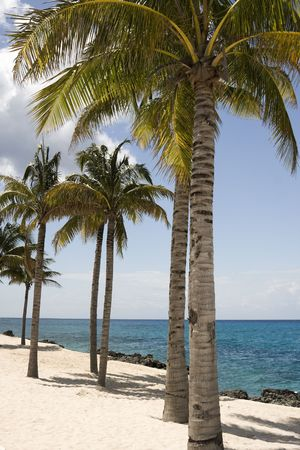 cozumel: Palmeras en la playa en Cozumel Mexico