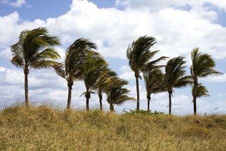 フロリダ州で風に吹かれてヤシの木 写真素材