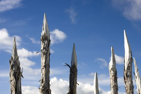 Dangerous Sharp Wooden Spikes for Protection