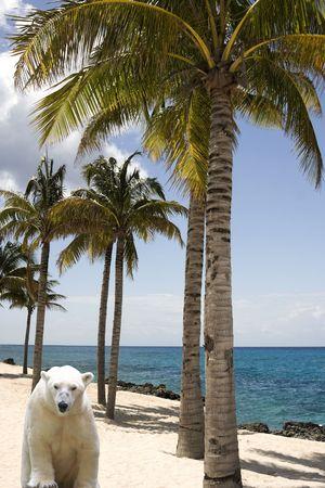 Global Warming Concept met IJsbeer in de tropen