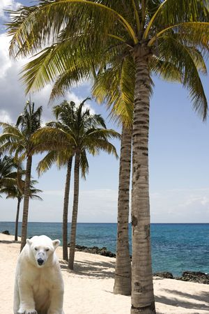 beach animals: Global Warming Concept with Polar Bear in the Tropics