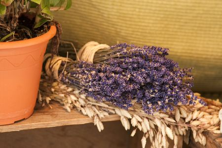 Purple Lavender with Potted Plant on Background