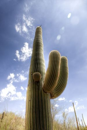 Cactus in the Sonoran Desert part of Saguaro National Park - HDR Stock Photo