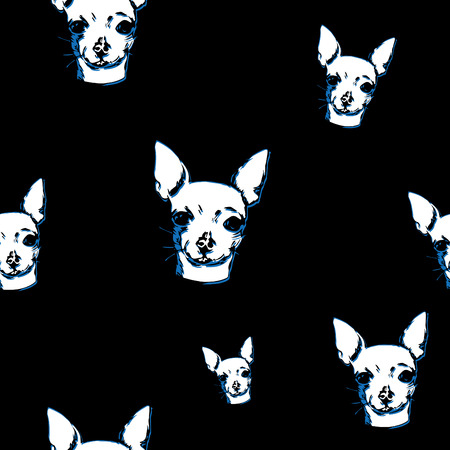 Chihuahua pet on black background.
