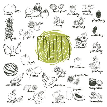 손으로 그린 스케치의 유기 과일입니다. 메뉴 디자인 요소입니다.