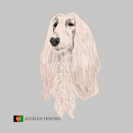 手描きのスケッチとアフガニスタンの旗犬。