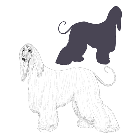 borzoi: Afghan hound vector illustration.