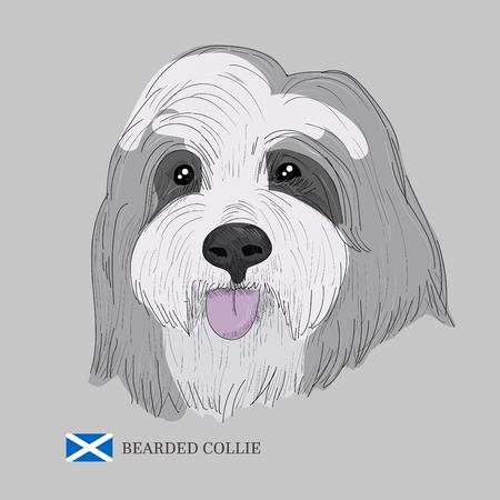 Hand drawn dog sketch and scottish flag. Illusztráció