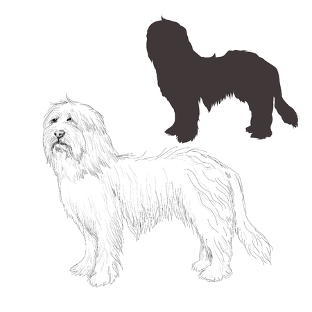 Bearded Collie vector illustration.