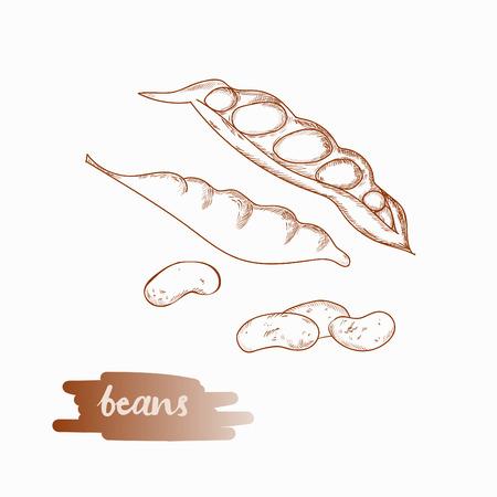 Food ingredient vector illustration.