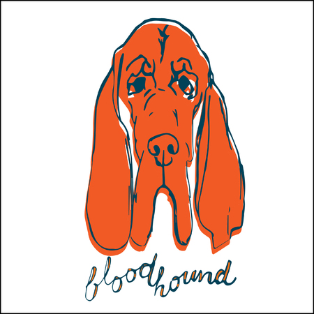 Hand drawn dog portrait. Orange dog head on white background. Sketch of purebred dog. T-shirt print idea for pet lovers.