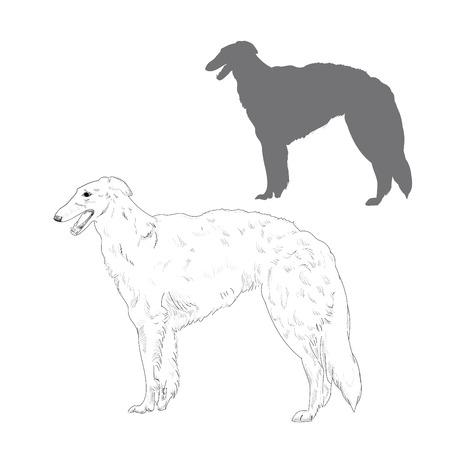 borzoi: Hand drawn dog sketch.