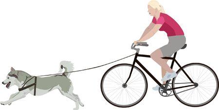 Bikejoring dog sport vector illustration. Husky with harness on a leash. Sport with dog.