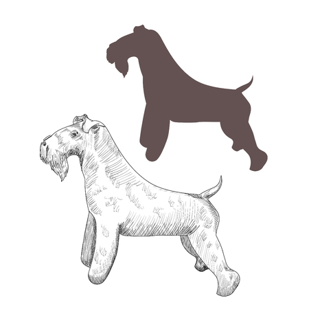 kerry blue terrier: Purebred dog sketch and silhouette isolated on white background.