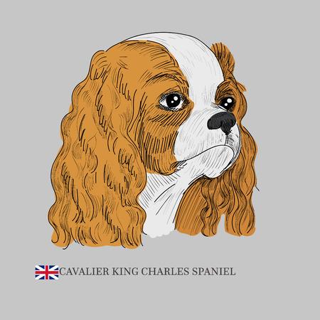 Hand drawn dog sketch.