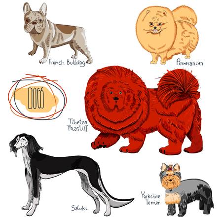 Set of hand drawn dog breeds.