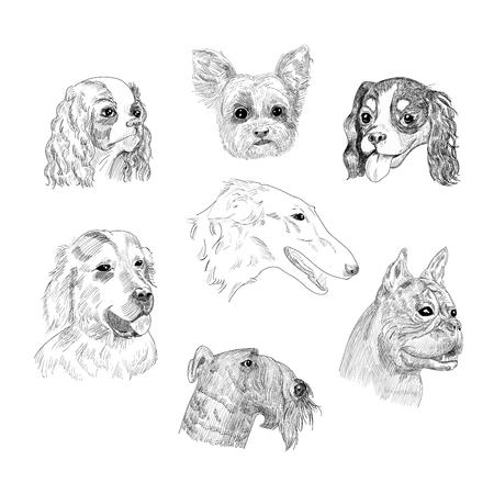手描き犬コレクション ホワイト バック グラウンド上に分離。  イラスト・ベクター素材