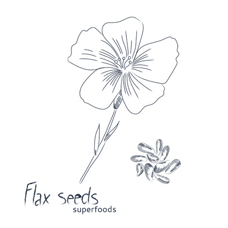 Flax flower vector illustration. Ilustracja