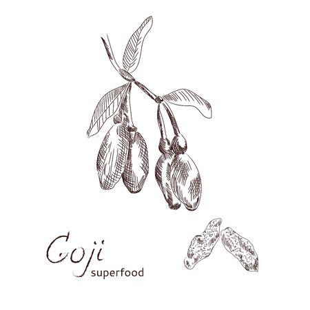Goji Exotic berries hand drawn sketch. Stock Vector - 86939667