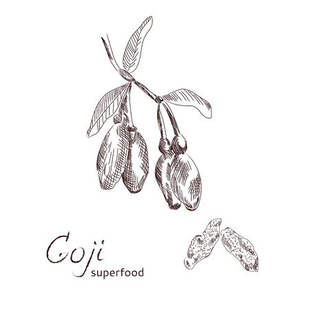 Goji Exotic berries hand drawn sketch. Illustration