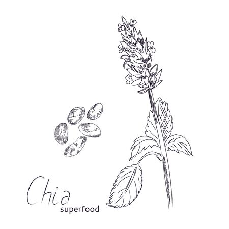 Chia seeds vector illustration.