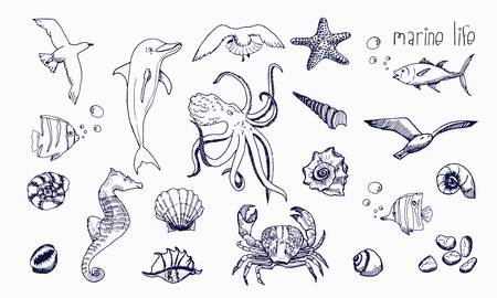 Underwater animals hand drawn sketch.