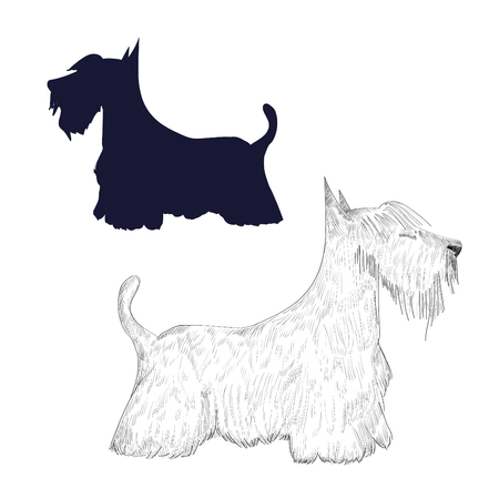 Hand drawn dog isolated on white background.