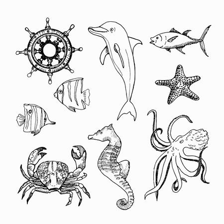 Sea creatures isolated on white background. Illustration