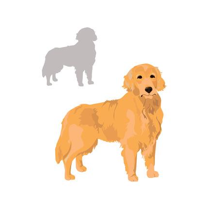 Illustrazione di vettore dell'animale domestico del Labrador.