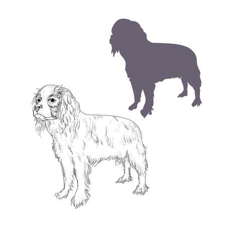 Hand drawn dog breed illustration isolated on white background.
