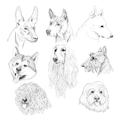 borzoi: Hand drawn dog collection isolated on white background.