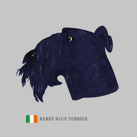 kerry blue terrier: Hand drawn dog sketch and a flag of Ireland.