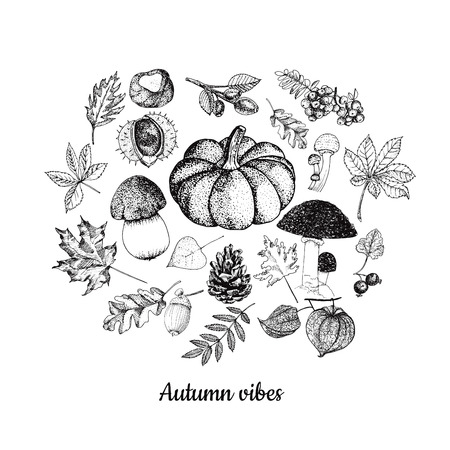 Fruit van herfst botanische schetsen. Stock Illustratie