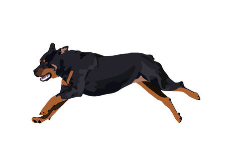 Jumping rottweiler isolated on white background. Illustration