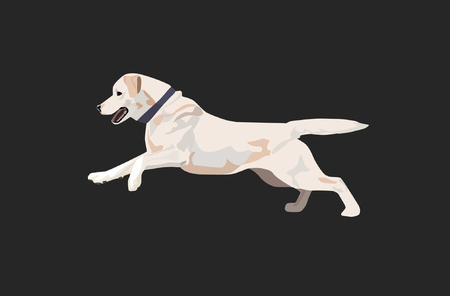 Labrador retriever with collar isolated. Illustration